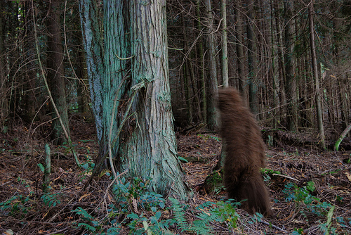 Learning Game Designers Game-Based Learning Bigfoot